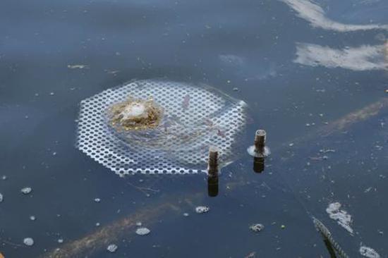 大清河入湖口,藻车从这里抽取藻水。