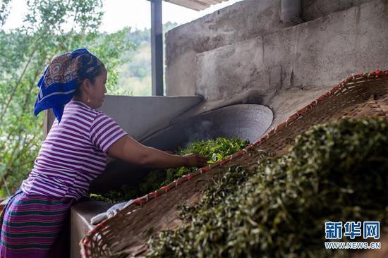 6月13日,布朗山布朗族乡老曼峨村村民在家翻炒茶叶。  新华社记者 胡超 摄