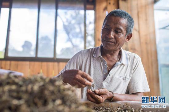 6月13日,布朗山布朗族乡老曼峨村村民在村里的茶叶初制厂挑拣茶叶。新华社记者 胡超 摄
