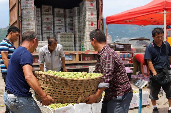 绥江李子交易市场上农户正在出售李子