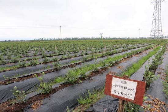 万亩生态观光农业园蓝莓园