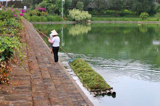 工人在清理杂草(王娅男/摄)