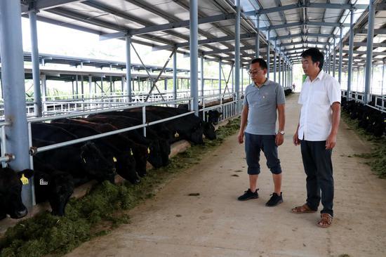 镇村人员经常深入养殖合作社开展相关工作