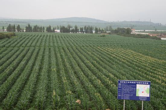 粮食高产创建