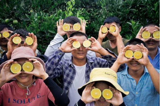 """▲龙陵基地工作人员手持""""云冠橙""""合影,预计40天后,云冠橙将彻底成熟。(摄影:阿良)"""