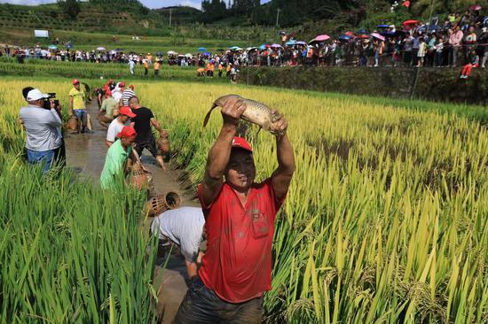 龙江乡稻花鱼节助农增收