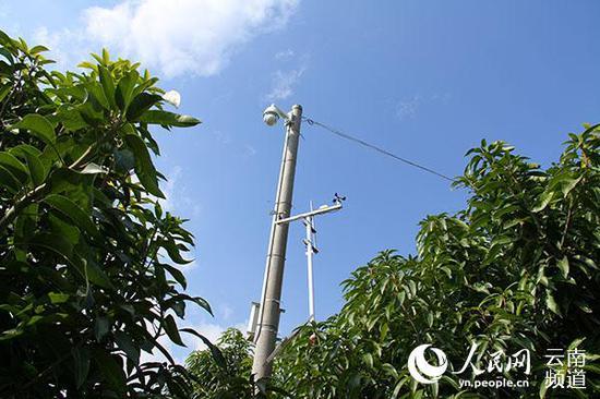 华坪果子山上的一处视频监控及气象信息采集设备。(人民网 符皓 摄)