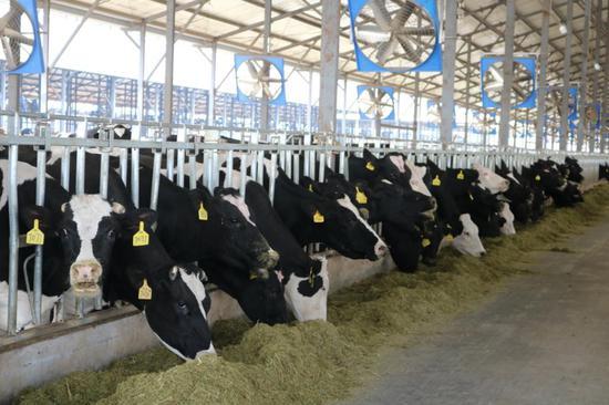 绿色有机奶为鹤庆县域经济发展注入新鲜血液