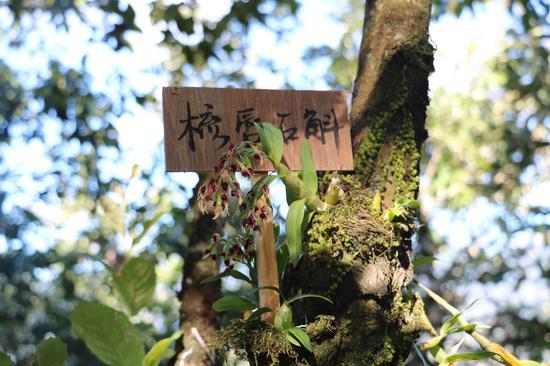 云南龙陵:党群共筑路  峡谷现新村