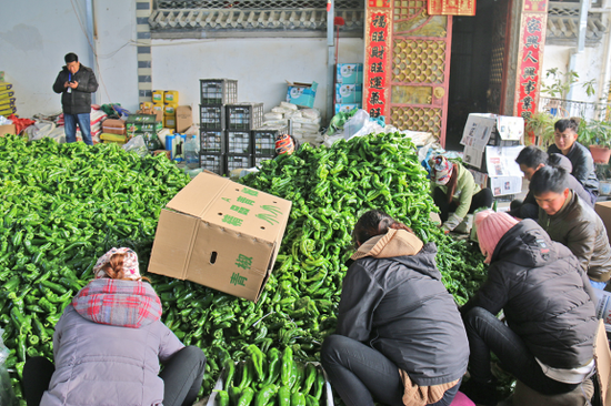保山市昌宁县大力发展蔬菜产业助乡村振兴