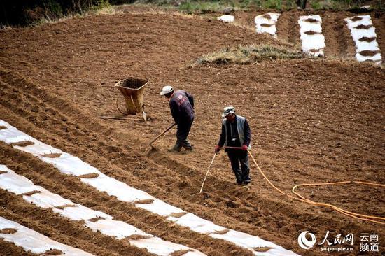 昆明市东川区汤丹镇小河村群众利用抗旱小水窖,对新种的玉米进行引水灌溉。张正余摄
