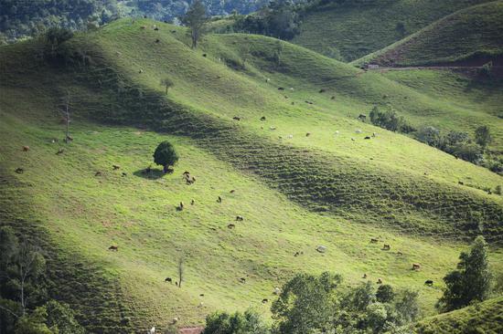 四季常绿高原牧场