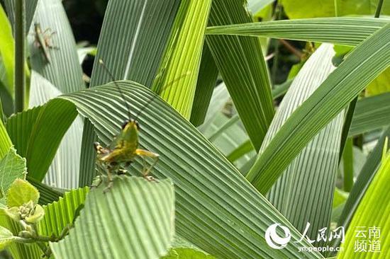云南省林业和草原局供图