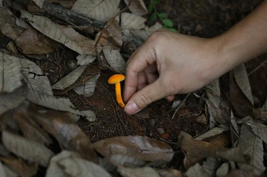 图5吴刚在林中采集标本。新华网 赵普凡 摄