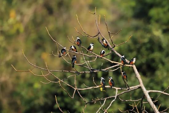 "COP15 春城之邀丨中国""亚马逊""——德宏:古老生物栖息地"