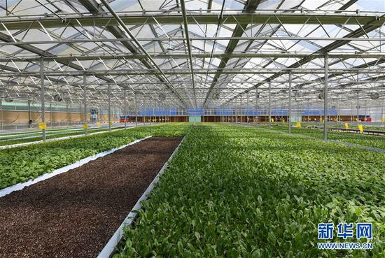 这是云南砚山县者腊乡夸溪村的蔬菜种植基地在进行喷灌作业(4月24日摄)。