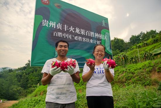 秦万钟、卢大敏夫妇开心地迎接火龙果丰收季