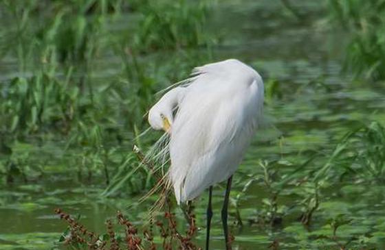 高清图丨冬季的云南江川 鸟儿的天然乐园