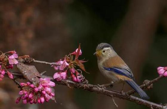 高清图丨第三届高黎贡山国际观鸟节举行