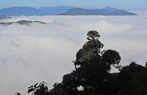 高清图丨云雾缭绕 金平分水岭宛如水墨丹青画