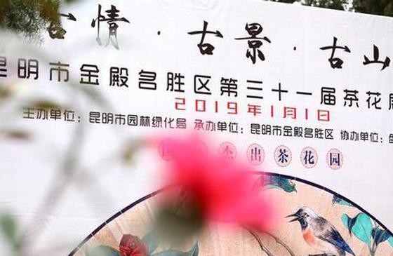 昆明金殿茶花展启幕 1215个品种供人观赏