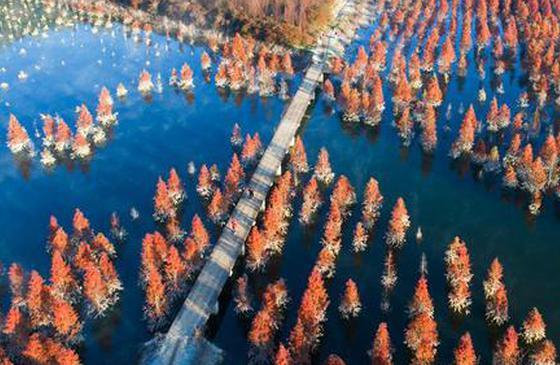 高清图丨昆明:滇池上游湿地美如画