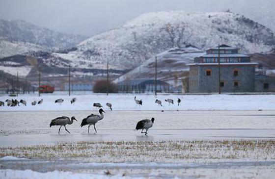 """高清图丨香格里拉:愿""""我""""有幸 陪你看一场雪"""