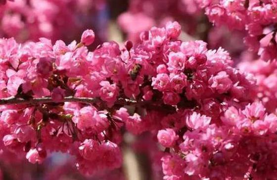 """四月天 到云南赴一场""""美""""的盛宴"""