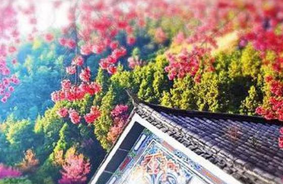 旅游丨大理三月好风光 春光明媚花季正好