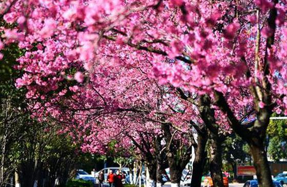 """最美芳菲四月天 去云南赴一场""""美""""的盛宴"""