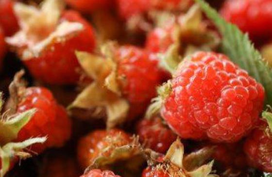 美食丨吃刺泡儿的季节到了 你还不来云南吗?