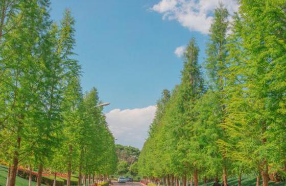 高清图丨童话般的云大:春天的白云 春天的树