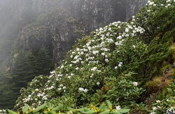 """高清图丨昆明轿子雪山的夏日""""花变"""""""