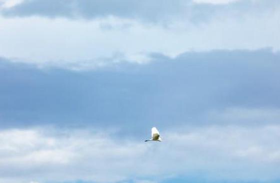 旅游丨这个七月 到大理的稻田里感受夏天的风