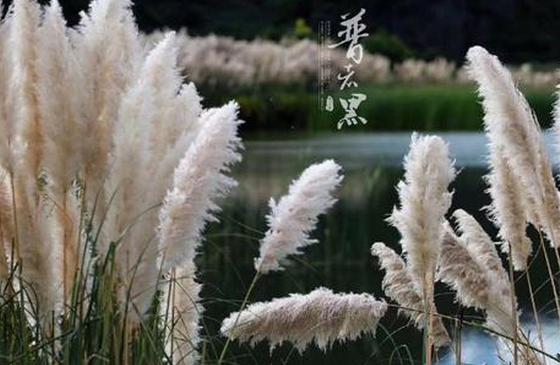 高清图丨普者黑:鱼戏莲叶间浪漫的诗意