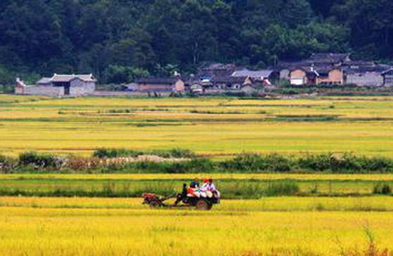 高清图丨走进最美乡村户撒 体验不一样的云南秋