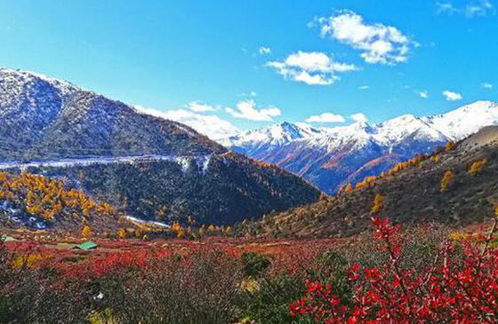 高清图丨云南白马雪山:香格里拉四季枯荣皆斑斓