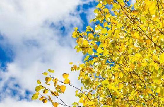 高清图丨泸沽湖山美水美人更美 给人以遐想与思忆