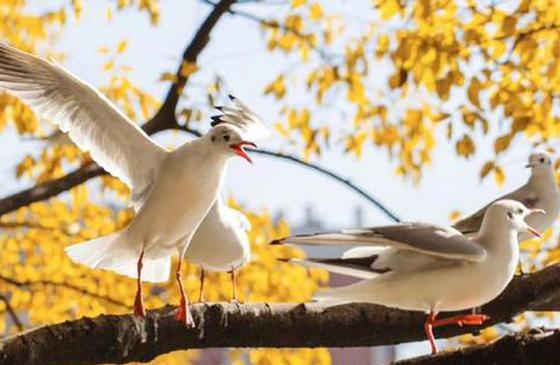高清图丨金色昆明:温暖冬日 与白色小精灵对话