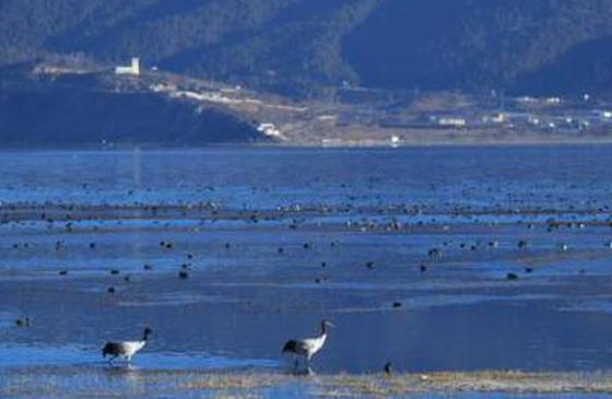 走进云南香格里拉的候鸟天堂 带你感受生态纳帕海