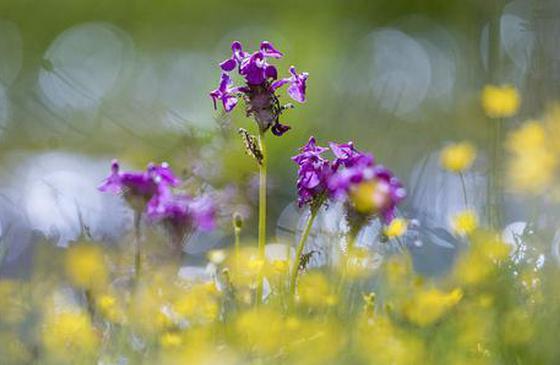 旅游丨大地回春时 #我在香格里拉等你# 不见不散!