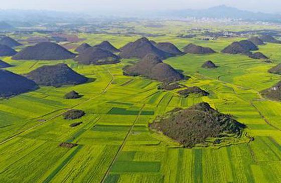 高清图丨云南罗平:大地春意浓 百万亩油菜花盛开