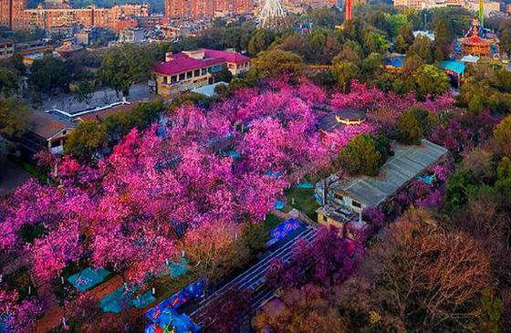 """高清图丨春天重启 春城盛放:""""你来了,我一直都在"""""""