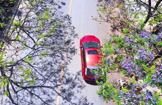 蓝花初绽,属于昆明的春日浪漫来了