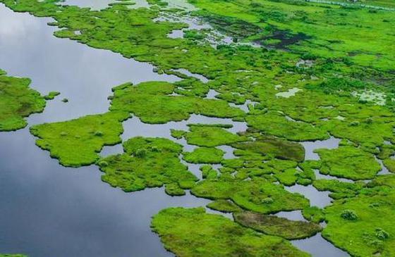 高清图丨换上令人喜悦的绿色壁纸,收获腾冲夏天的惊喜