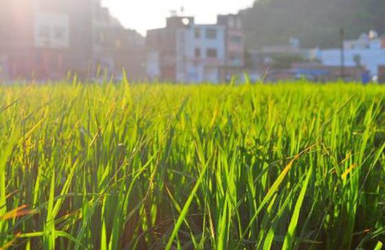 高清图丨文山八宝镇:伫立美好乡间 追寻理想生活