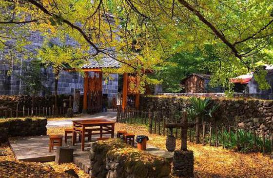 高清图丨腾冲银杏村:藏着云南最迷人的秋天