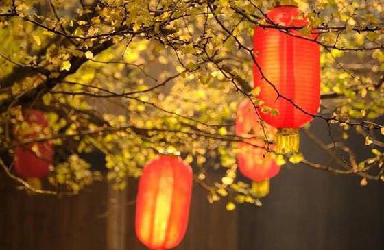 高清圖丨騰沖銀杏村:藏著云南最迷人的秋天