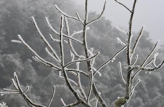 高清圖丨云南雪景圖鑒:銀裝素裹,景美如畫