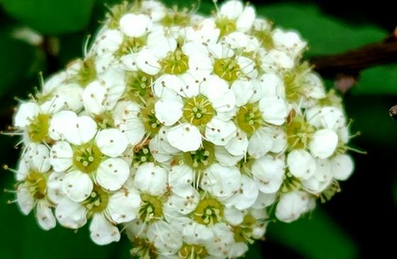 领略生物多样性之美丨赏丽江老君山多彩植物